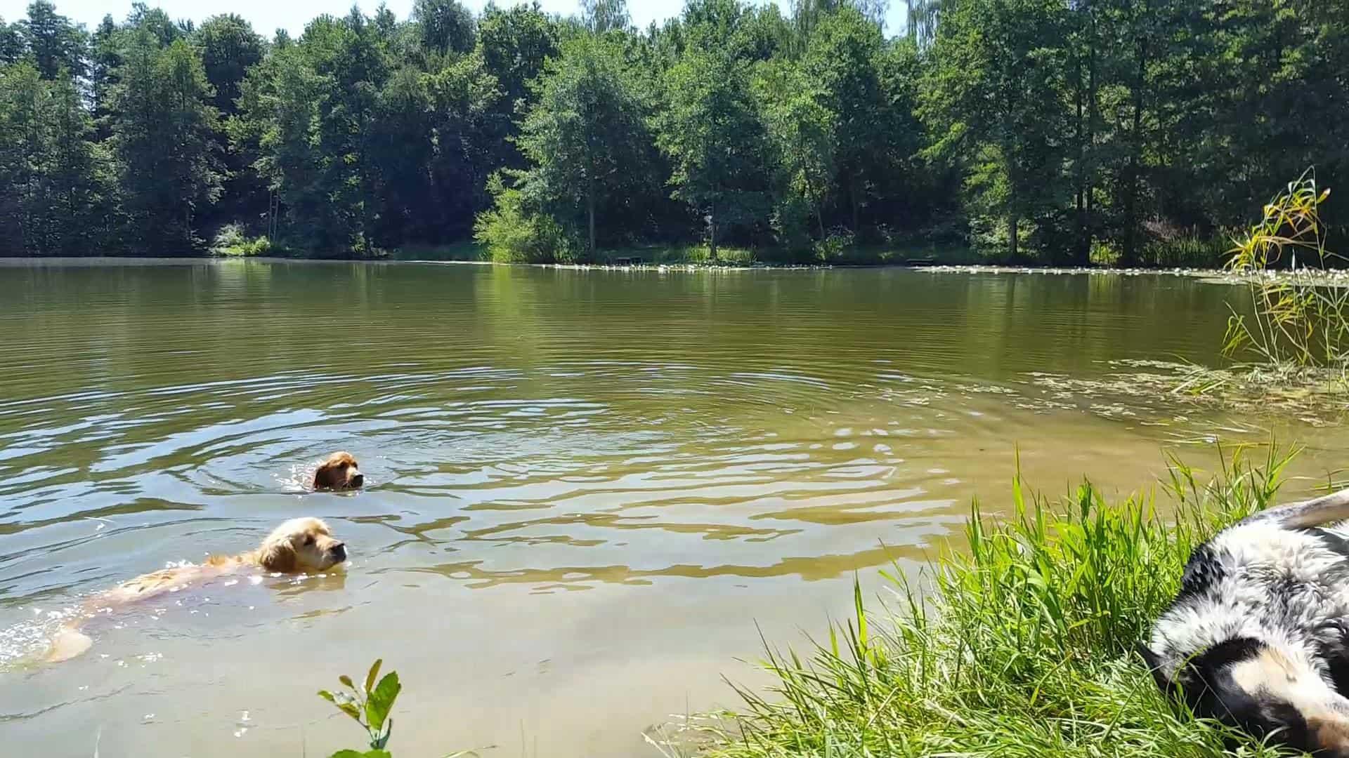 Schwimmen am Seerosenteich
